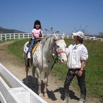 【アクティビティ】蒜山ホースパークで乗馬体験♪