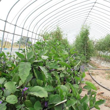 ・・・野菜畑・・・