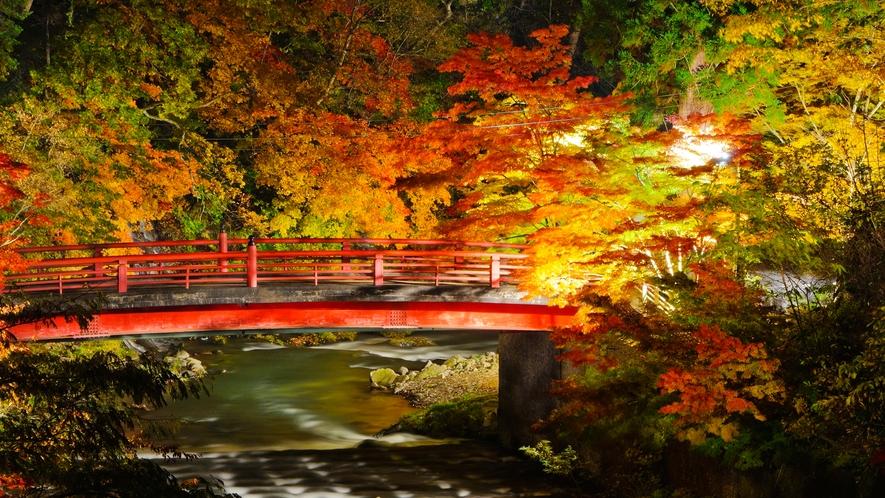 **【中野もみじ山】紅葉ライトアップ