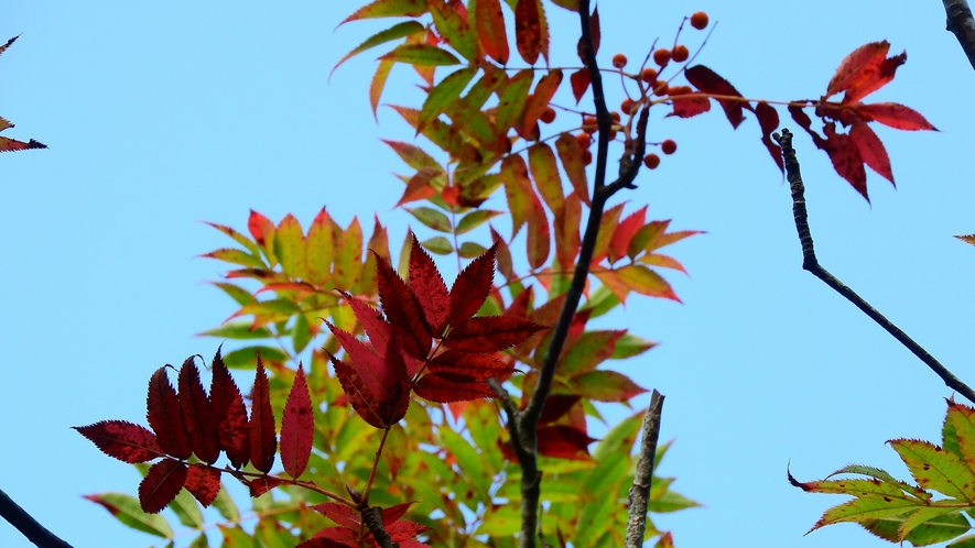 *これから色鮮やかな紅葉の始まり