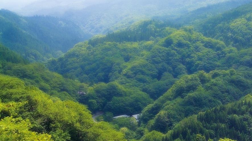 *【展望】美しい緑の景色が広がります