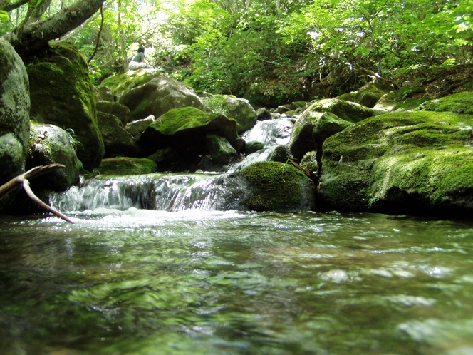 箕輪山 渓流