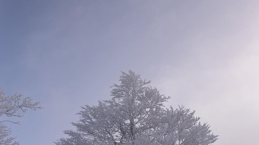 目の前がゲレンデ!標高1000mパウダースノー!