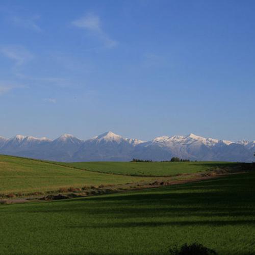 秋蒔き小麦の新芽と冠雪した十勝岳連峰