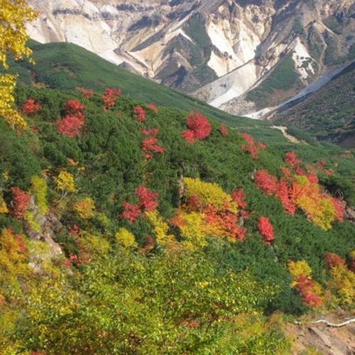 緑の中に赤や黄が映える十勝岳の紅葉