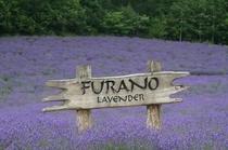 lavender_winery