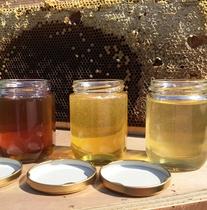 *季節によって風味が変わる百花蜜(純蜂蜜)/パンやヨーグルトにたっぷりと付けて♪