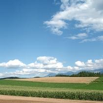 *夏の風景/弧を描くように連なる丘陵地帯の風景は、富良野ならではの絶景です。