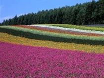 【周辺】2. 花畑