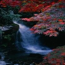 秋の万葉公園