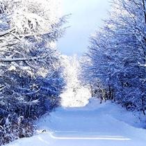 *【Asahi自然観 SNOW PARK】山形県内最大級のハーフパイプと、パウダースノーが魅力です!