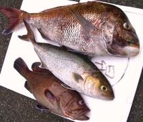 本日の釣果の一部(当日の夕食になります♪)
