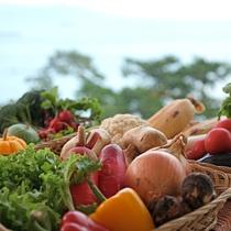 【地産地消】さんさんと降り注ぐ太陽の光で育った旬の淡路野菜