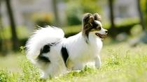 *愛犬と一緒に泊まれる宿。「ペットプラン」をご利用ください。