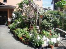 田原屋の庭