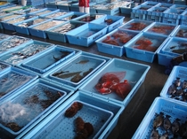 市場で新鮮な食材を毎日仕入れております