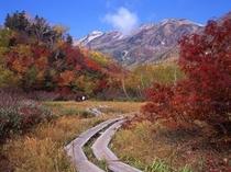 紅葉狩りを満喫「栂池自然園」