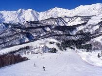 栂池高原スキー場の最上部「栂の森ゲレンデ」