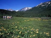 中部山岳国立公園「夏の栂池自然園」