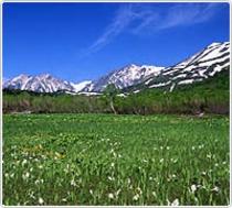 中部山岳国立公園「初夏の栂池自然園」