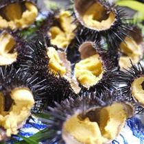 *夕食一例/殻付きのウニ!鮮度抜群です!
