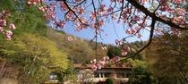 白雲荘・春