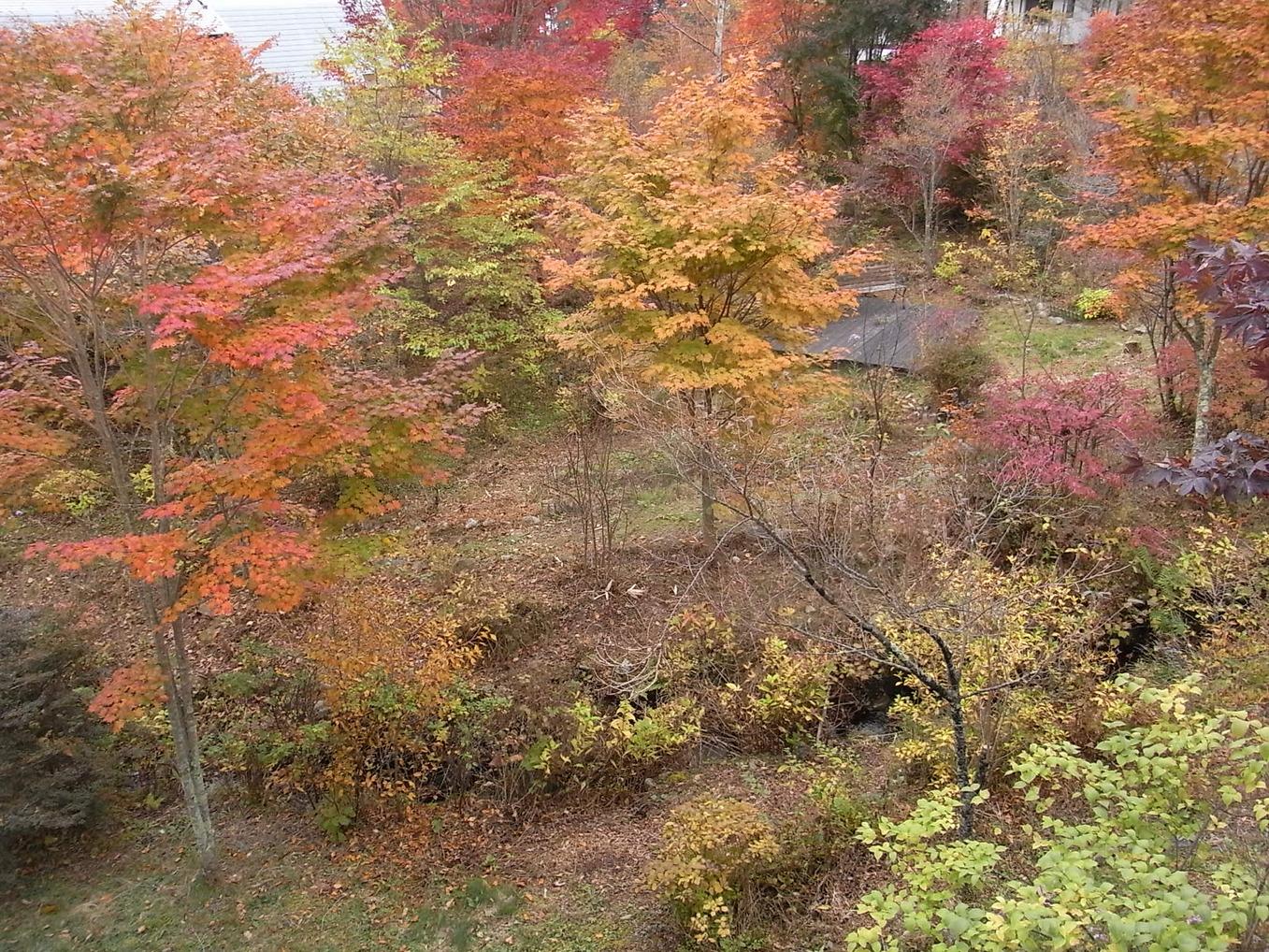 秋の庭の風景