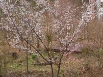 春の裏庭の風景