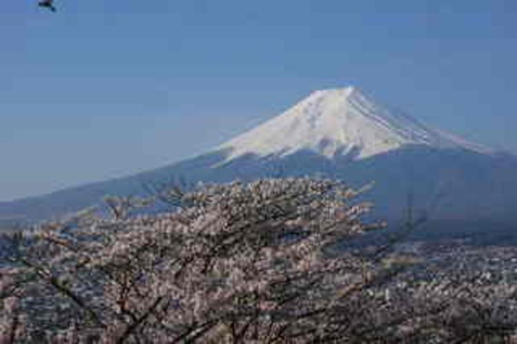 新倉山からの富士と桜
