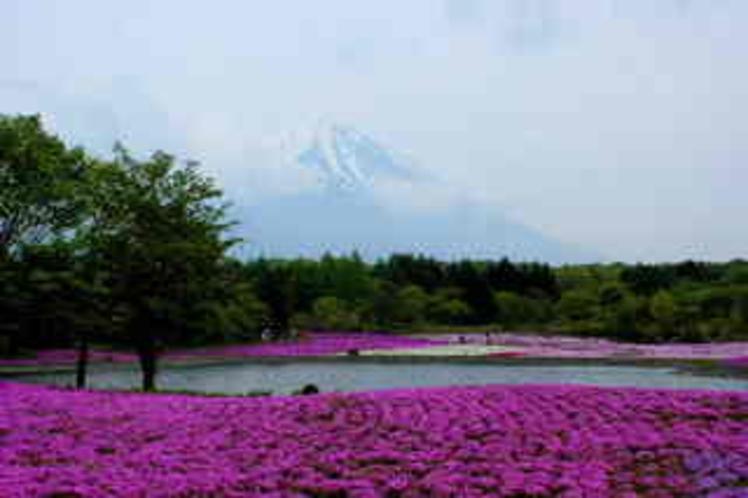 富士と芝桜