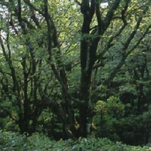 長野山緑地公園(ホテルより車で約30分)