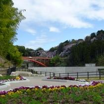 大門ダムから見える桜