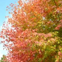 国東の紅葉ピークは12月初旬くらいまでです。