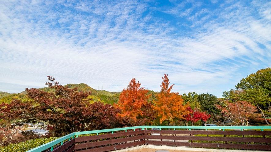 【秋】紅葉と青空