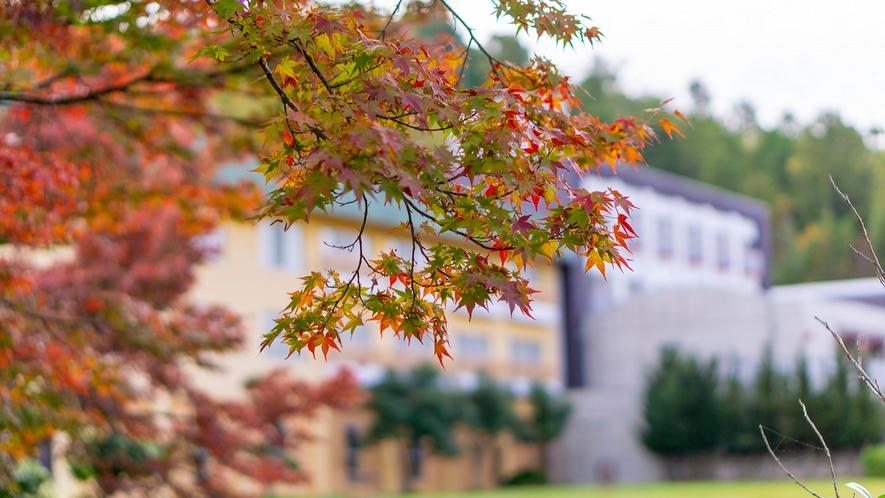 【秋】紅葉が美しい季節