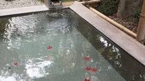 紅葉の浮かぶ露天風呂