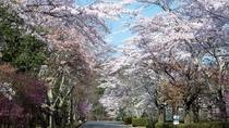 風景(春)