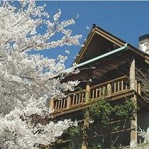 白桜+外観