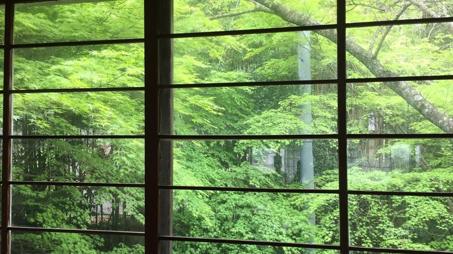 *【景色】大広間から見れる新緑