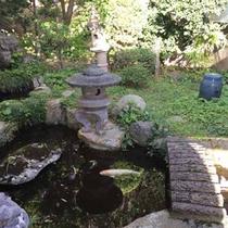 中庭の池の鯉太郎
