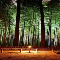 【観光】偕楽園竹林