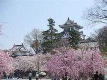 大垣城下桜