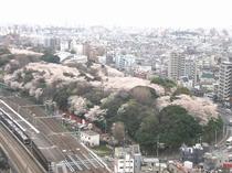 【観光】飛鳥山公園
