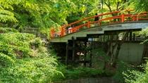 美しい緑に朱赤の橋が写真映え。新緑の「河鹿橋」