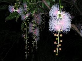 宮古島の花