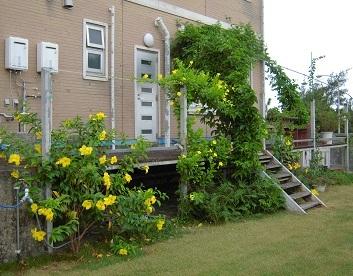 ウッドデッキと庭の花