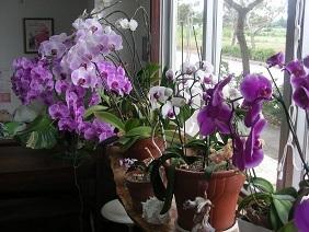 カフェの花
