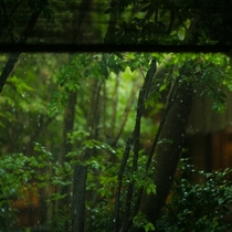 【中庭】「雨の野鶴亭」。雨に濡れた日本庭園の風情が美しいと、常連のお客様からご好評いただいています。