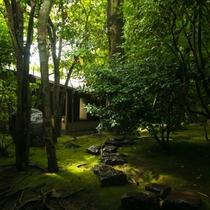 【中庭】当館中央に鎮座する苔生す日本庭園。館内の至るところから情緒あふれる景色をご覧いただけます。