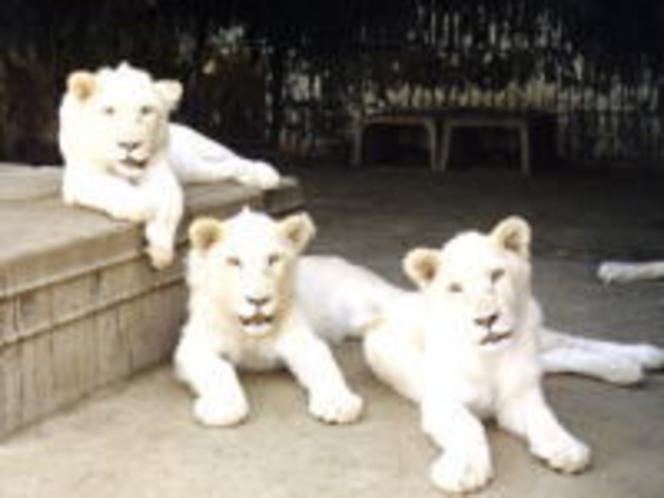 野生の王国 那須サファリパーク☆迫力ある動物たちの姿をご覧ください。